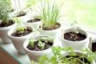 Herbs are indoor plants too
