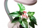 Determining proper lighting for indoor plants