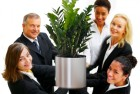 Office plants boost staff morale and increase productivity